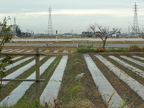 Aosagi468